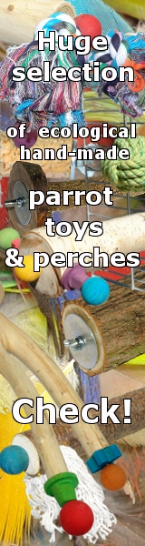 ecological parrot toys and perches