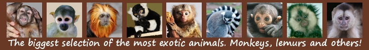 Największy wybór najbardziej egzotycznych zwierząt
